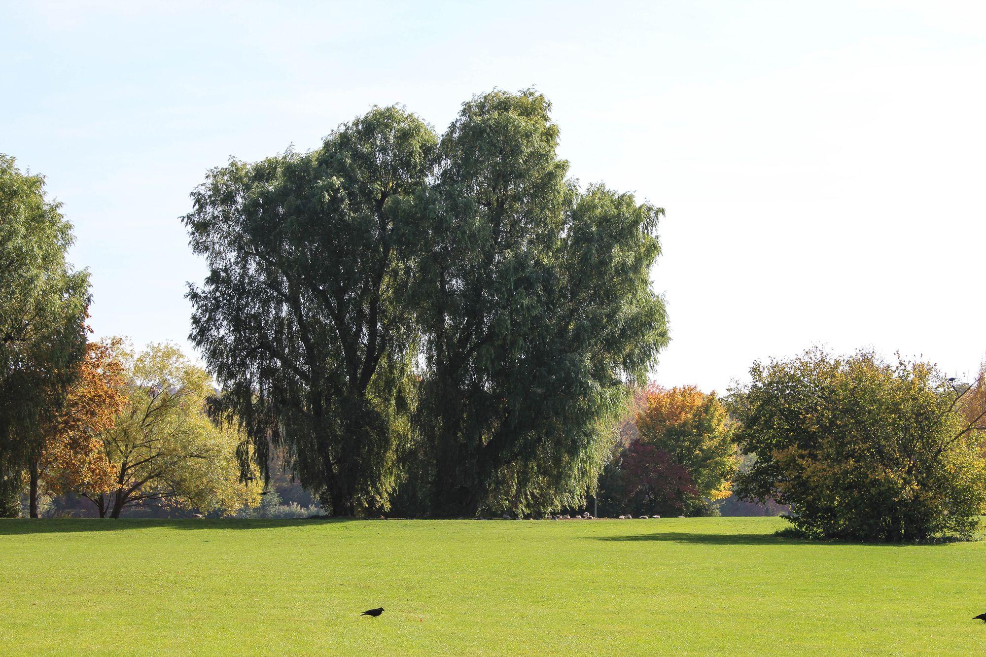 Max-Eyth-See Herbst Impressionen