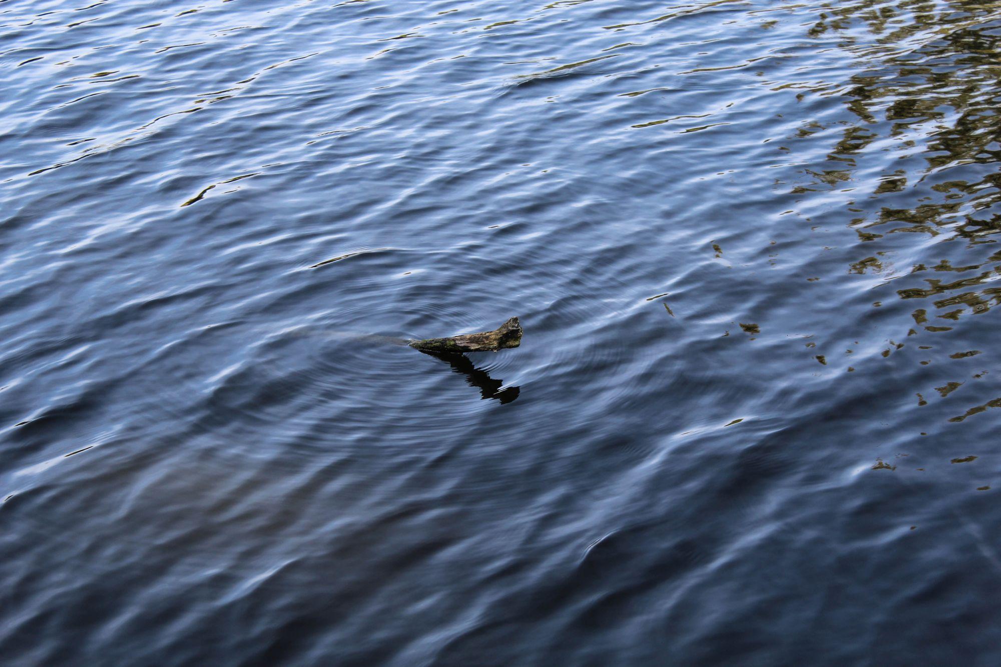 Ein Ast im Wasser